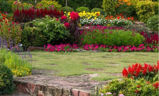 Záhrada na jar – tipy a triky, čo robiť po zimnom období